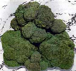 gallery/images-exotic-broccoli